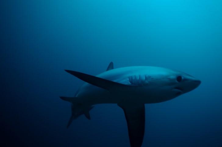 Tiburon en el oceano