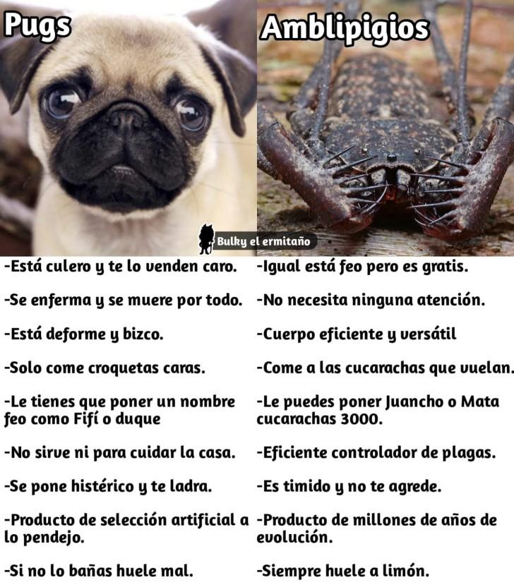 Marcianadas 359 071218001700 (138)