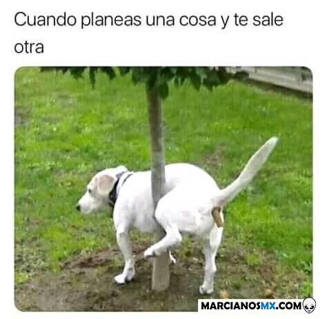 Marcianadas 360 21122018001506 (261)