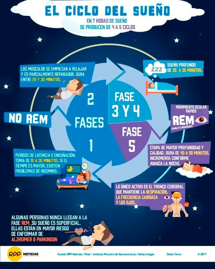 el ciclo del sueño