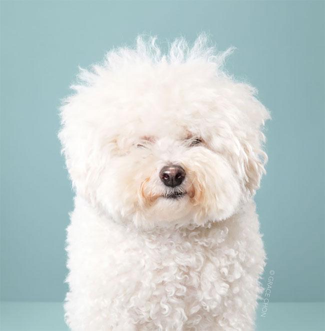 Perros corte pelo antes despues (1)