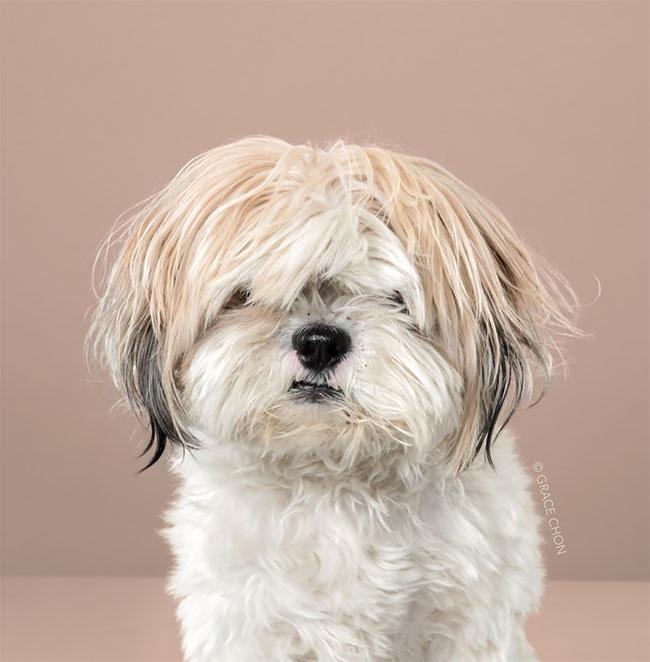 Perros corte pelo antes despues (15)