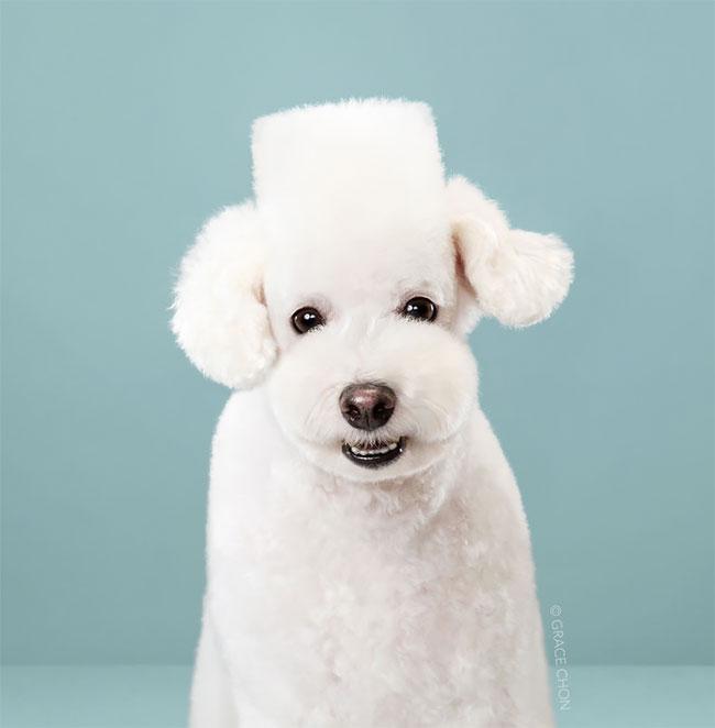 Perros corte pelo antes despues (2)