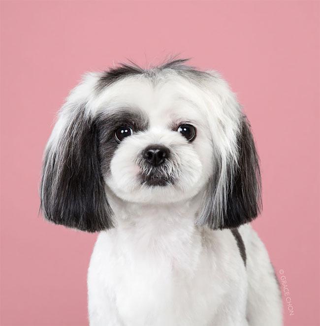 Perros corte pelo antes despues (7)