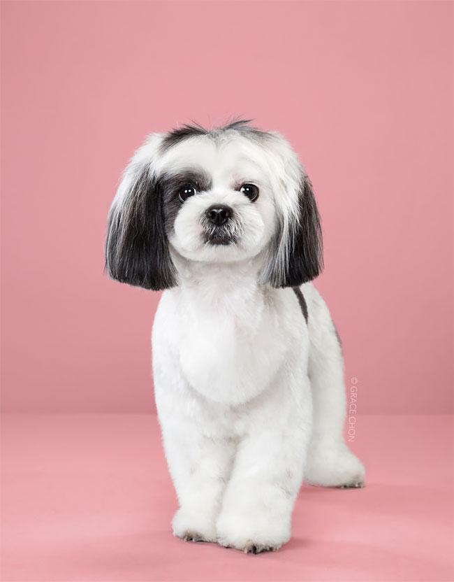 Perros corte pelo antes despues (8)