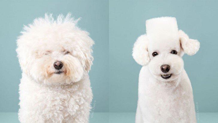 Perros cortes de pelo antes y despues