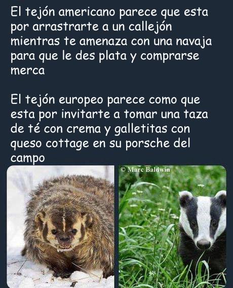Marcianadas 361 04012019001222 (95)