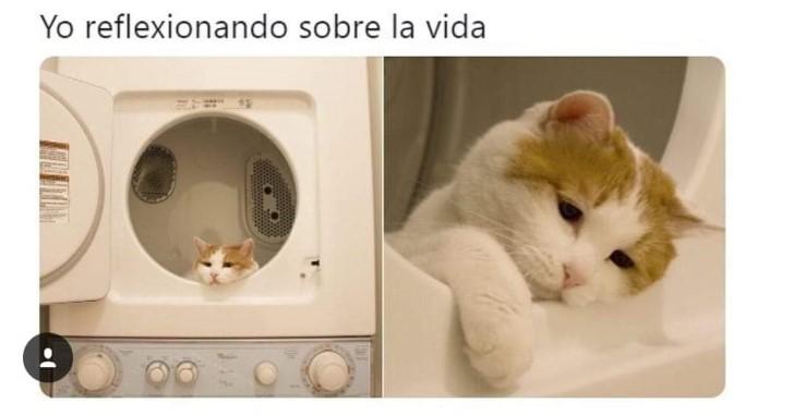 Marcianadas 362 110118001326 (162)
