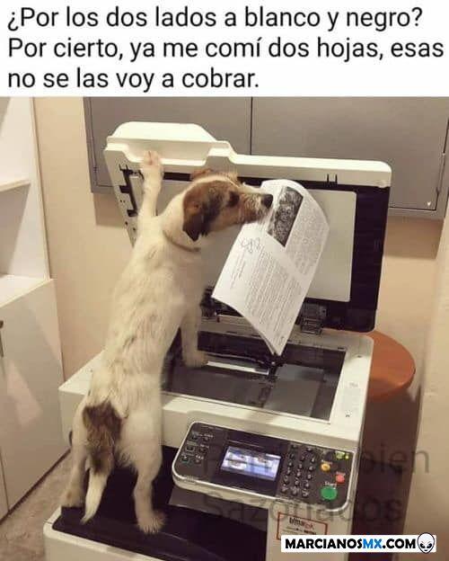 Marcianadas 362 110118001326 (209)