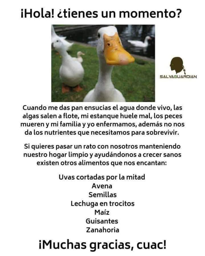 Marcianadas 364 250119001151 (129)