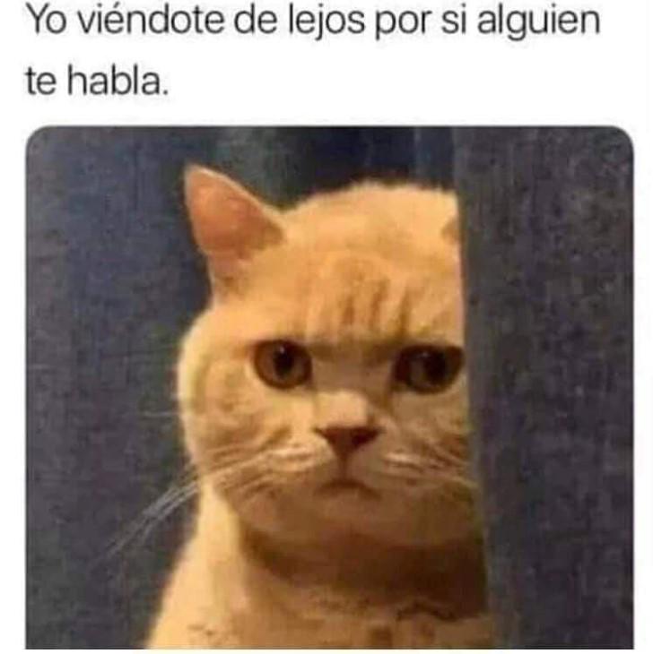 Marcianadas 364 250119001151 (199)