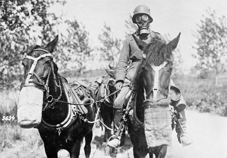 animales campo de batalla segunda guerra mundial (1)