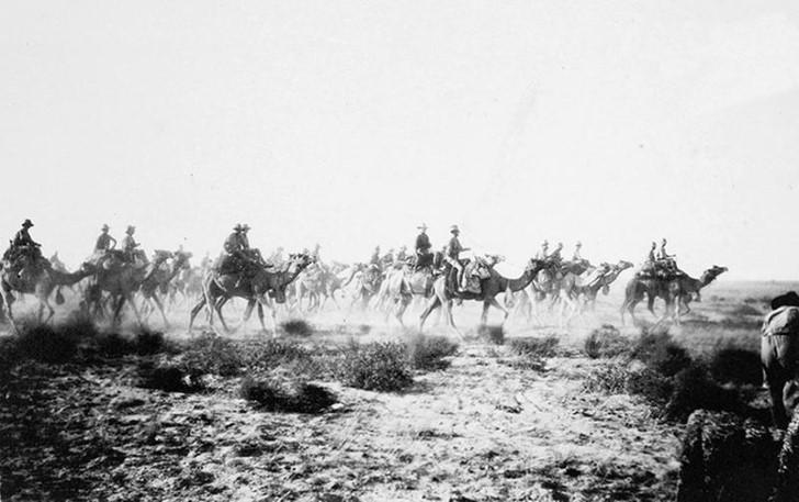 animales campo de batalla segunda guerra mundial (10)