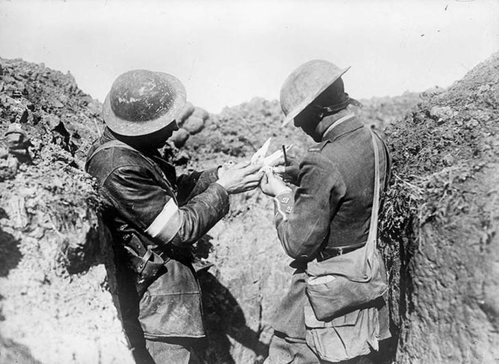 animales campo de batalla segunda guerra mundial (14)
