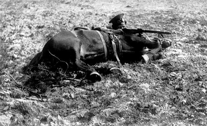 animales campo de batalla segunda guerra mundial (15)