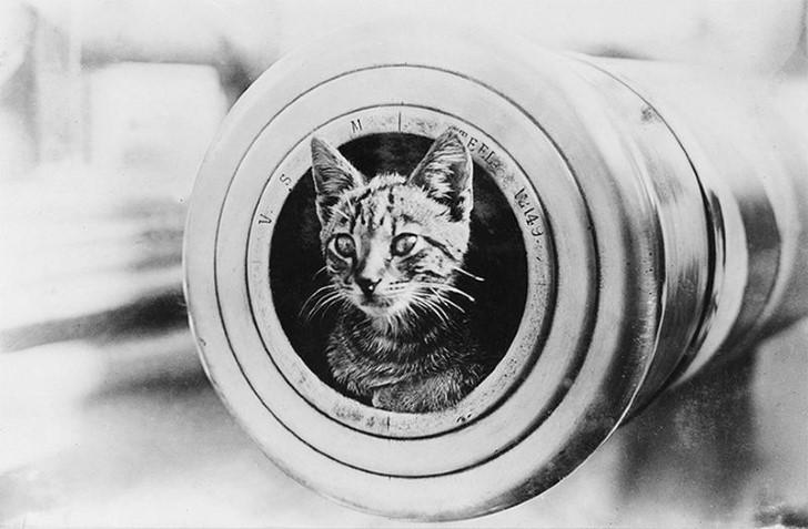 animales campo de batalla segunda guerra mundial (19)