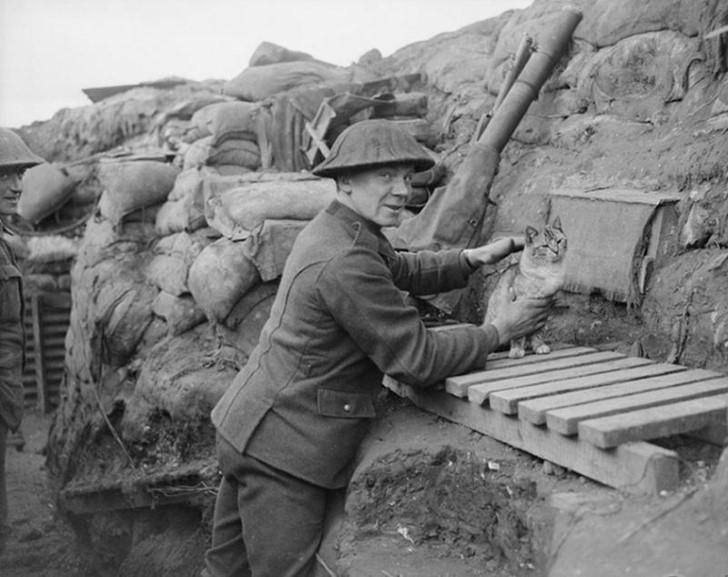 animales campo de batalla segunda guerra mundial (2)