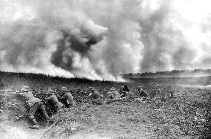 animales campo de batalla segunda guerra mundial (22)