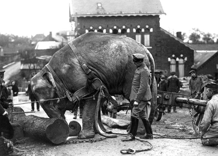animales campo de batalla segunda guerra mundial (24)