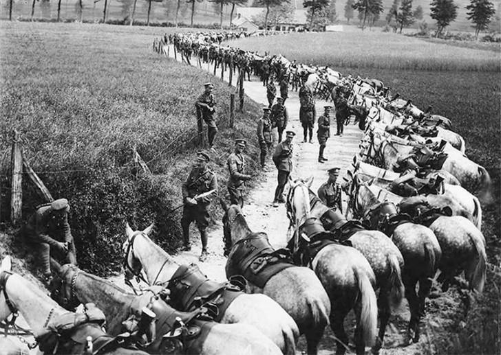 animales campo de batalla segunda guerra mundial (25)
