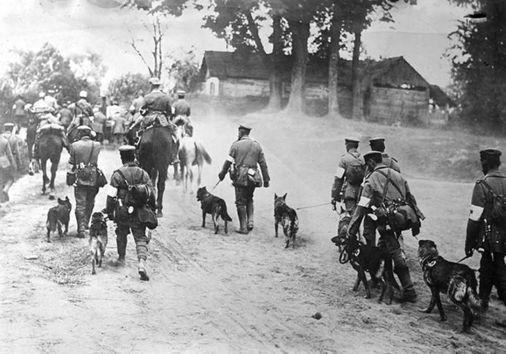 animales campo de batalla segunda guerra mundial (3)