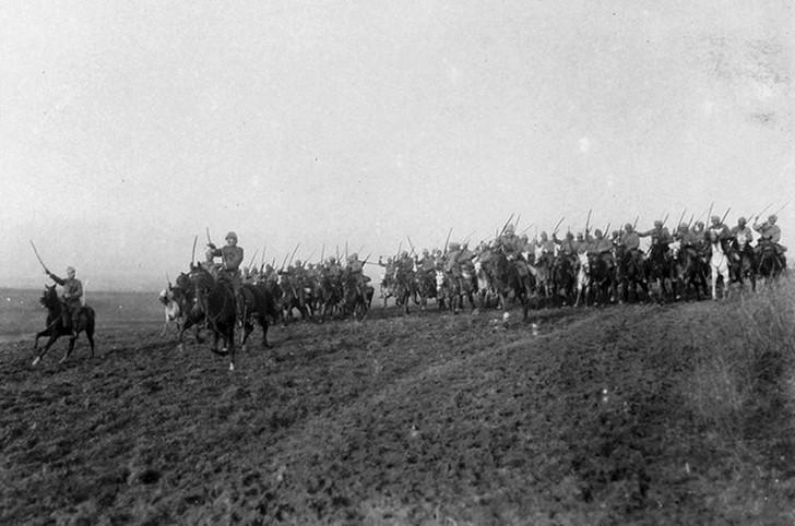 animales campo de batalla segunda guerra mundial (31)