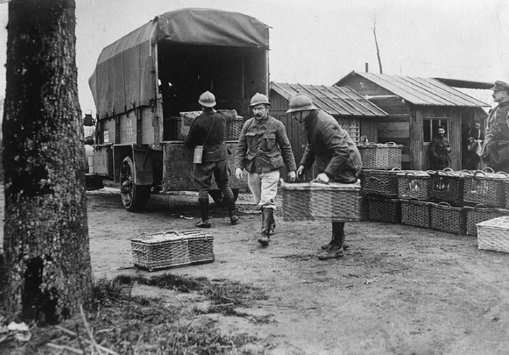 animales campo de batalla segunda guerra mundial (32)