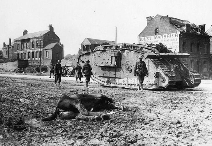 animales campo de batalla segunda guerra mundial (33)