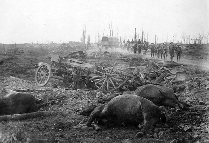 animales campo de batalla segunda guerra mundial (35)