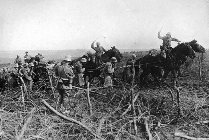 animales campo de batalla segunda guerra mundial (36)