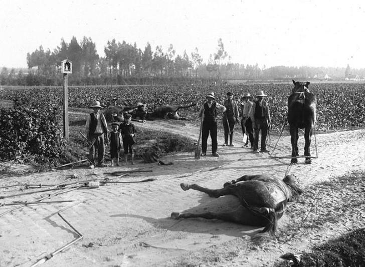animales campo de batalla segunda guerra mundial (38)