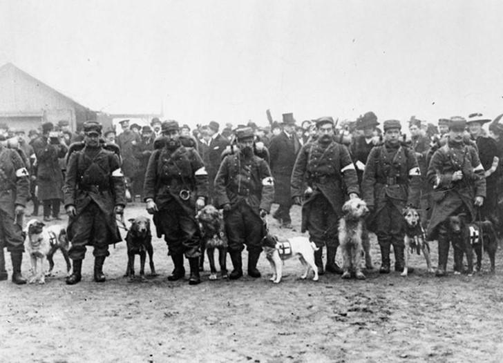 animales campo de batalla segunda guerra mundial (39)