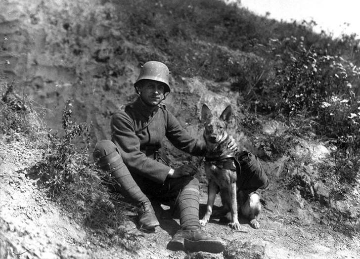 animales campo de batalla segunda guerra mundial (4)
