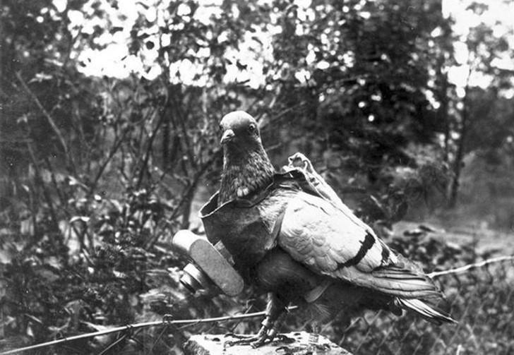 animales campo de batalla segunda guerra mundial (40)