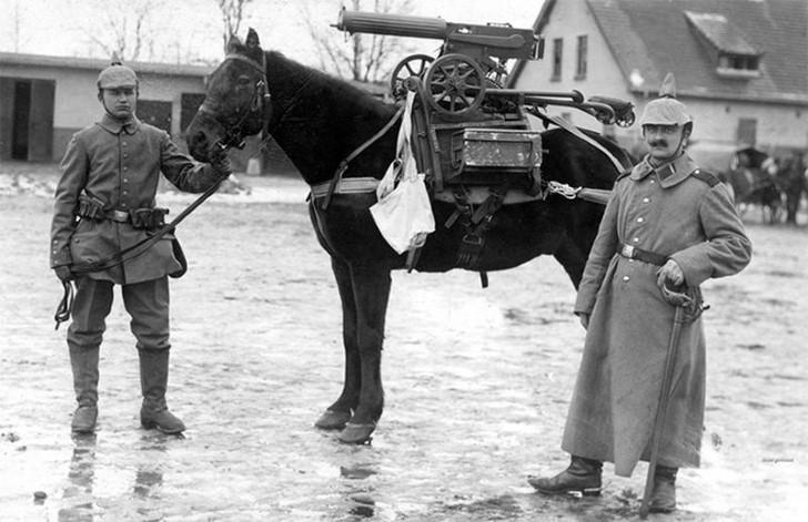 animales campo de batalla segunda guerra mundial (42)