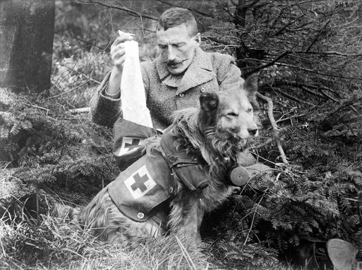 animales campo de batalla segunda guerra mundial (43)