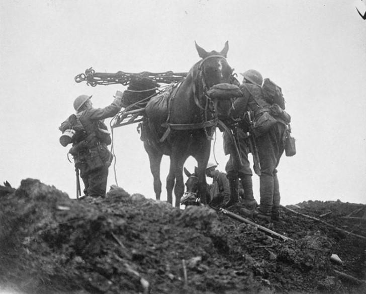 animales campo de batalla segunda guerra mundial (5)