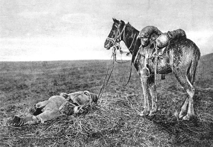 animales campo de batalla segunda guerra mundial (7)
