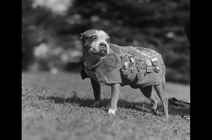 animales campo de batalla segunda guerra mundial (9)