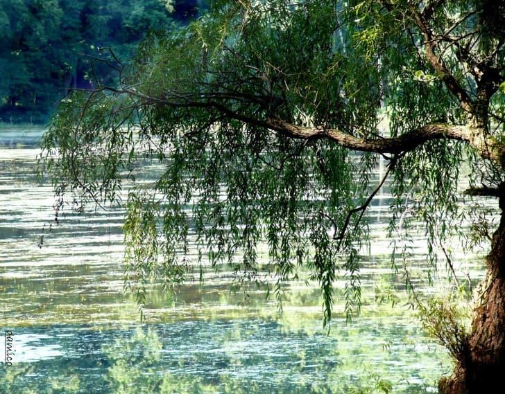 fantasma en un lago