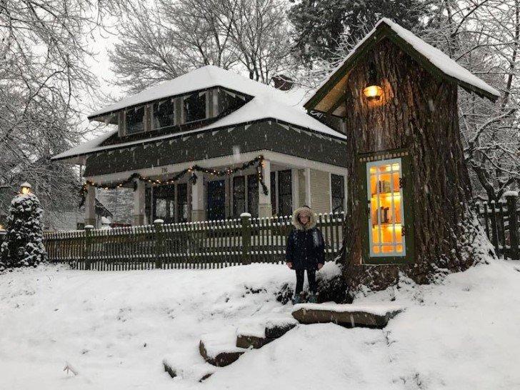 libreria en tronco de arbol (1)
