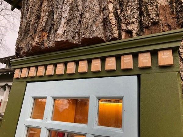 libreria en tronco de arbol (3)