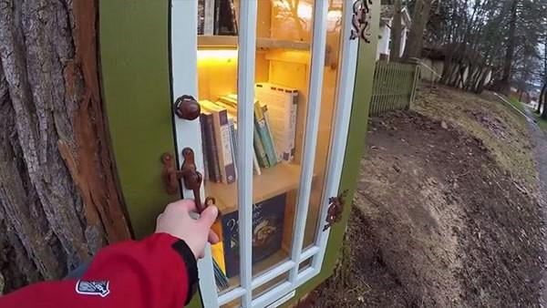 libreria en tronco de arbol (5)