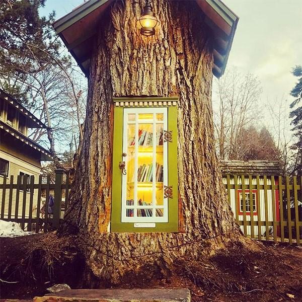 libreria en tronco de arbol (8)