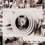 portada Fotografías animales en la Segunda Guerra Mundial