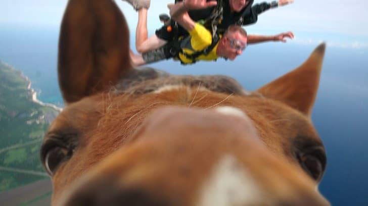 selfie caballo en el aire