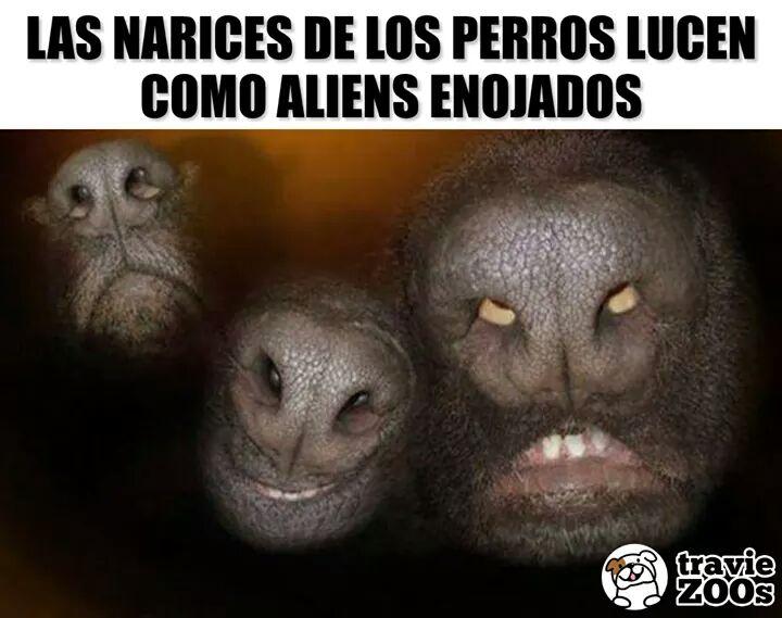 Marcianadas 365 010219001236 (146)