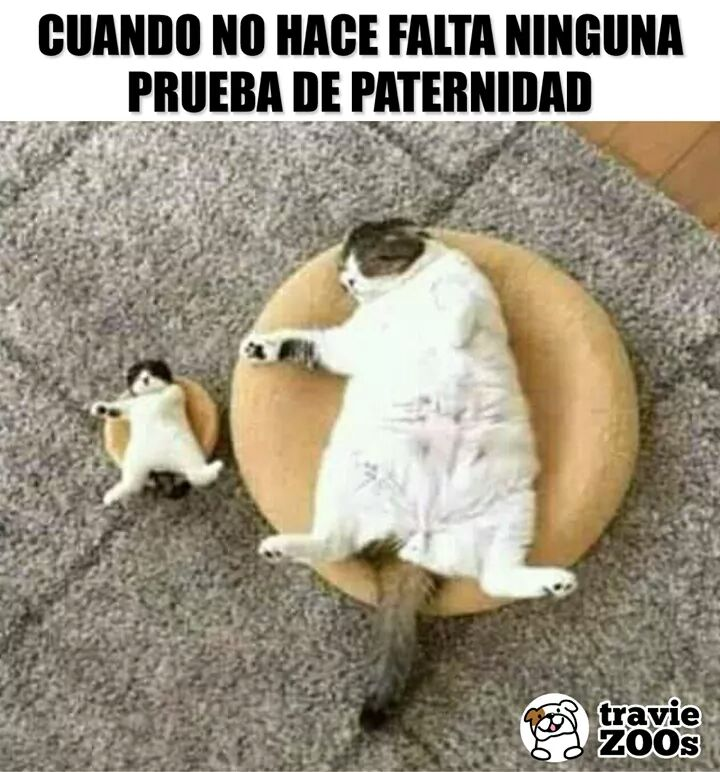 Marcianadas 365 010219001236 (88)