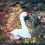 el ganso de oro