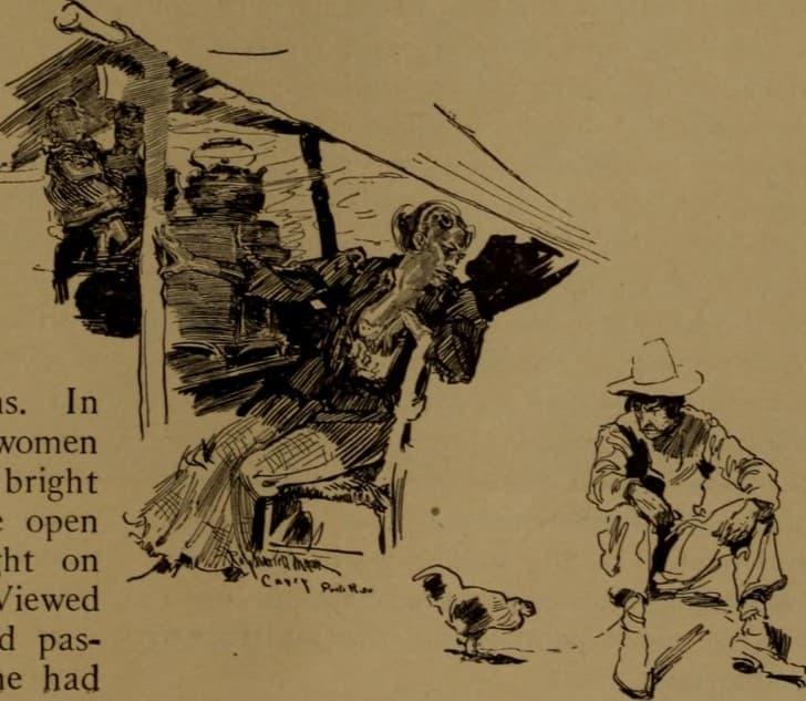 gallinas ilustracion(1)
